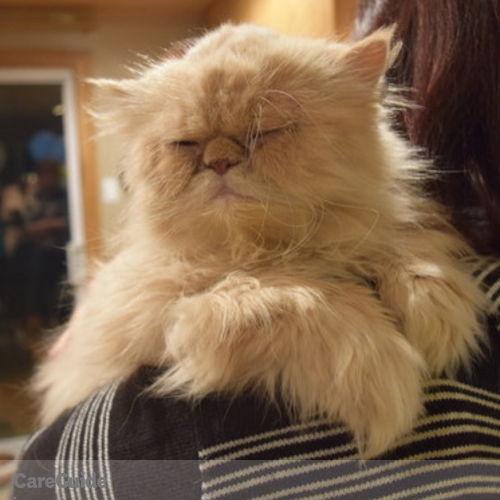 Pet Care Provider Alicia White's Profile Picture