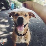 Pet Sitter Job in Redwood City