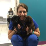 Affordable Veterinary Nurse Available for All Pet Sitting Needs