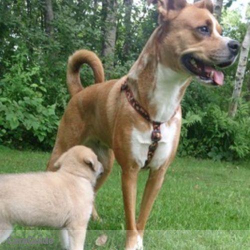 Pet Care Provider Alex Laferriere's Profile Picture