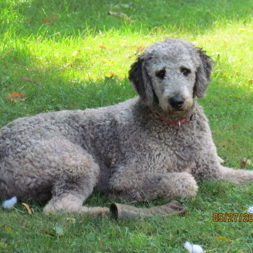 Pet Care Job Diane Pawling's Profile Picture