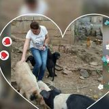 Available: Hardworking Animal Lover in Fort McMurray, Alberta, I have spent a lot of time with taking care of animals.