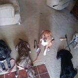 Pet Sitting Offered in Huntsville