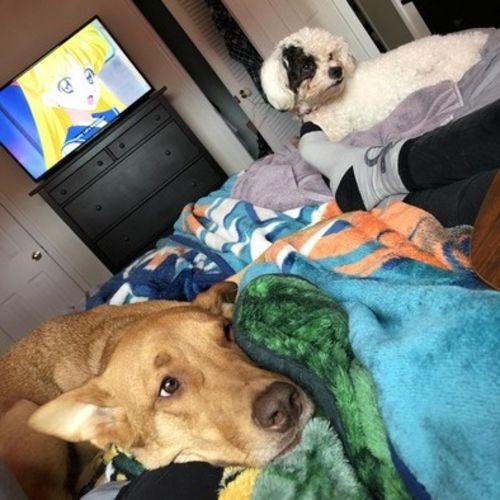 Pet Care Provider Amanda Ortiz Gallery Image 1