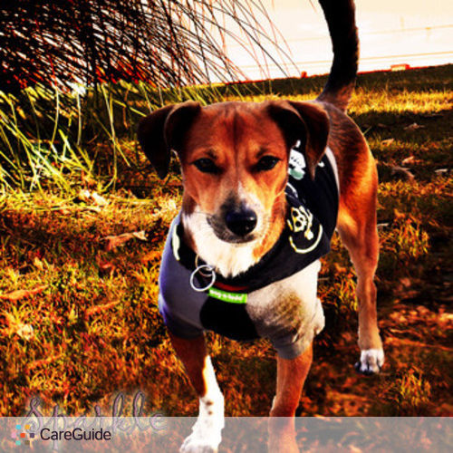 Pet Care Provider Precious Jewel's Profile Picture