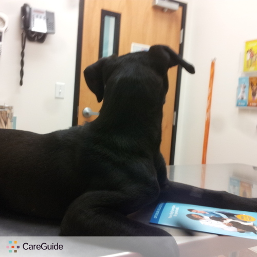 Pet Care Provider Summer Graham's Profile Picture