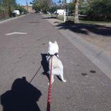 Tempe House Sitter Seeking Job Opportunities in Arizona