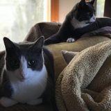 Hardworking Pet Sitting Professional in Centereach