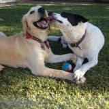 Dog Walker, Pet Sitter in Orange