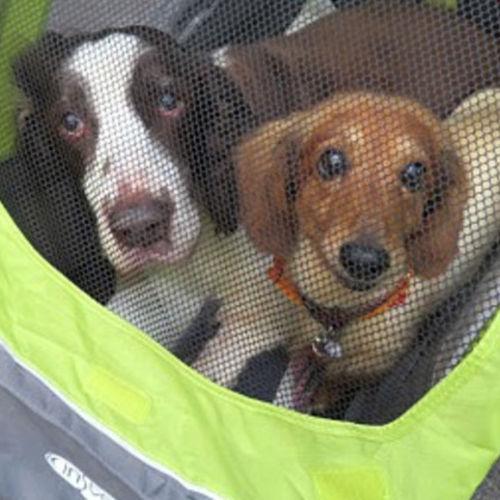 Pet Care Provider Deborah C Gallery Image 3