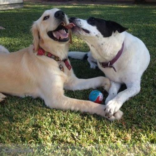 Pet Care Provider Dogsgowalkin Petsitting's Profile Picture