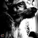 Dog Walker, Pet Sitter in Mission