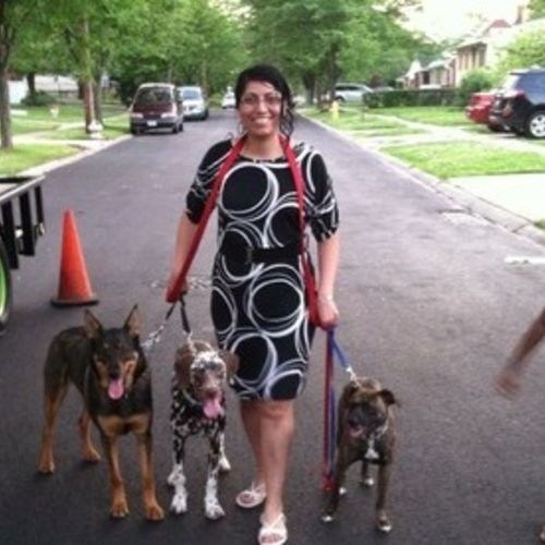 House Sitter Provider Aleyda Hernandez Sedlacek Gallery Image 1