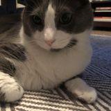 Summer cat sitting