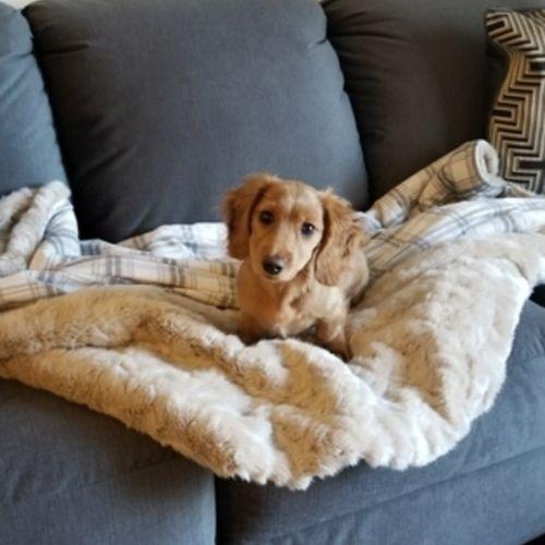 Pet Care Job Dave Keator's Profile Picture