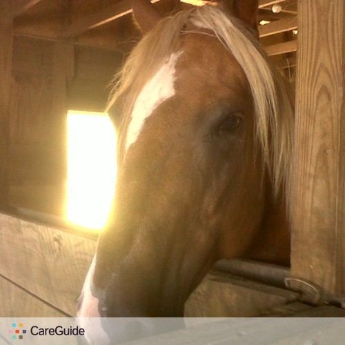 House Sitter Provider Amanda Dercole's Profile Picture