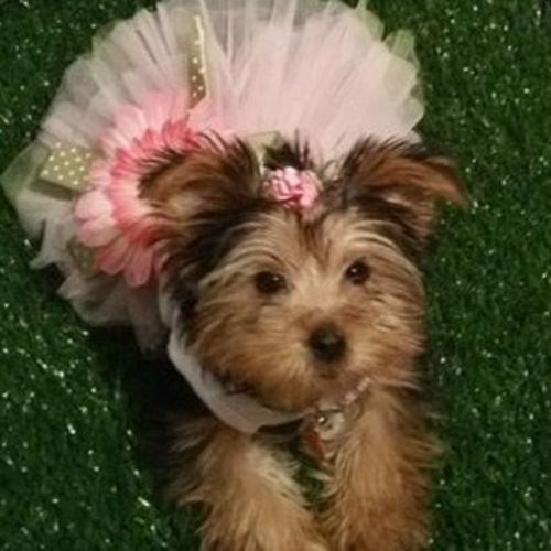 Pet Care Provider Dianna C Gallery Image 2