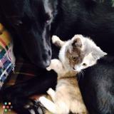 Dog Walker, Pet Sitter in Onalaska