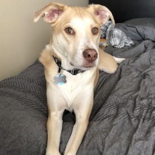 Pet Care Job Carol K's Profile Picture