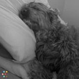 Dog Walker, Pet Sitter in Strathroy