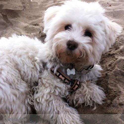 Pet Care Provider Conny P's Profile Picture