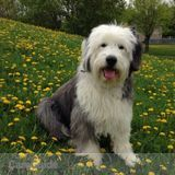 Dog Walker, Pet Sitter in Notre Dame De L'Ile Perrot