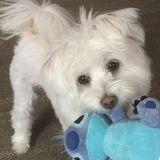 Dog Walker, Pet Sitter in Summer Shade