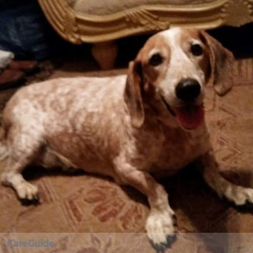 Pet Care Provider Jade G's Profile Picture