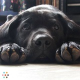 Veterinary Technician Pet Sitting, LLC