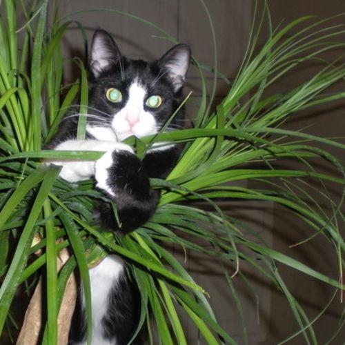 Pet Care Provider Sydney Cerqueira Gallery Image 2