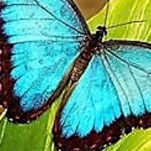 Elder Care Provider Aneita T's Profile Picture