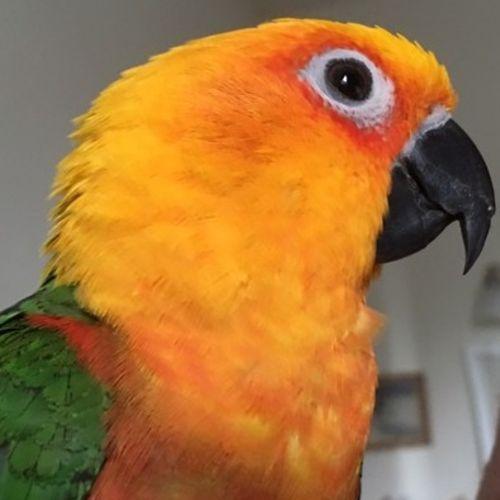 Pet Care Job Ann Auer's Profile Picture