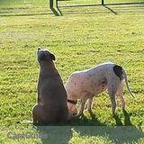 Dog Walker, Pet Sitter in Bowling Green