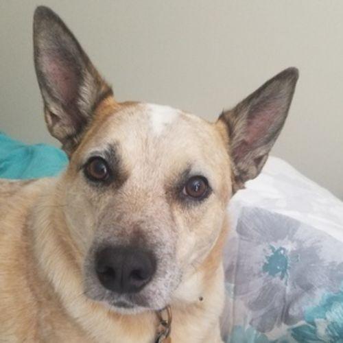 Pet Care Job Jessica D's Profile Picture