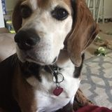 Neenah Pet Sitter Available!