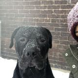 Pet sitting/Dogwalking offered in Toronto. Weekend overnight care