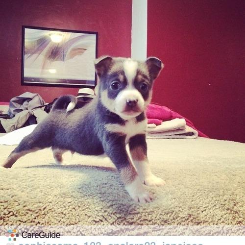 Pet Care Provider Sophia Sama's Profile Picture