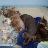 Excellent and Experienced Pet Care Provider