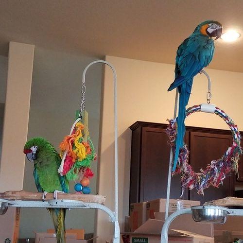 Pet Care Job Melanie Moss's Profile Picture