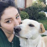 Dog Walker Job, Pet Sitter Job in Provo