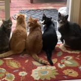 Westville cat care Professional needed for in home visits