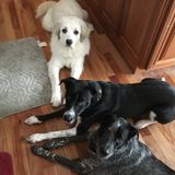Loving Pet Sitter looking to meet some four legged friends!