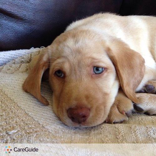 Pet Care Job Vickie Mouk's Profile Picture