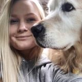 Interviewing For a Dog Sitter Job in Bellingham, Washington