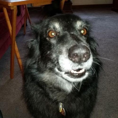 Pet Care Job Michelle Jones's Profile Picture