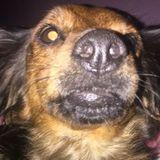 Dog Walker, Pet Sitter in Fairfield
