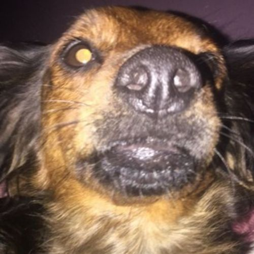 Pet Care Provider Emilie S's Profile Picture