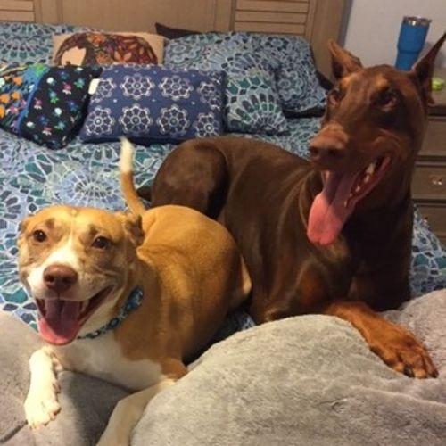 Pet Care Provider Alexandra P's Profile Picture