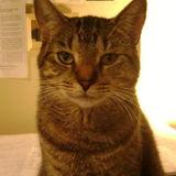 Animal Care graduate seeking part-time pet care opportunities.