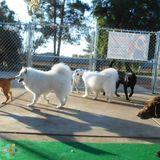 Pet Sitter, Kennel in Gilbert